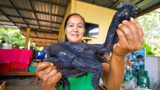 Village Food in Thailand – DINOSAUR BLACK CHICKEN!! | Shocking Taste and Texture!